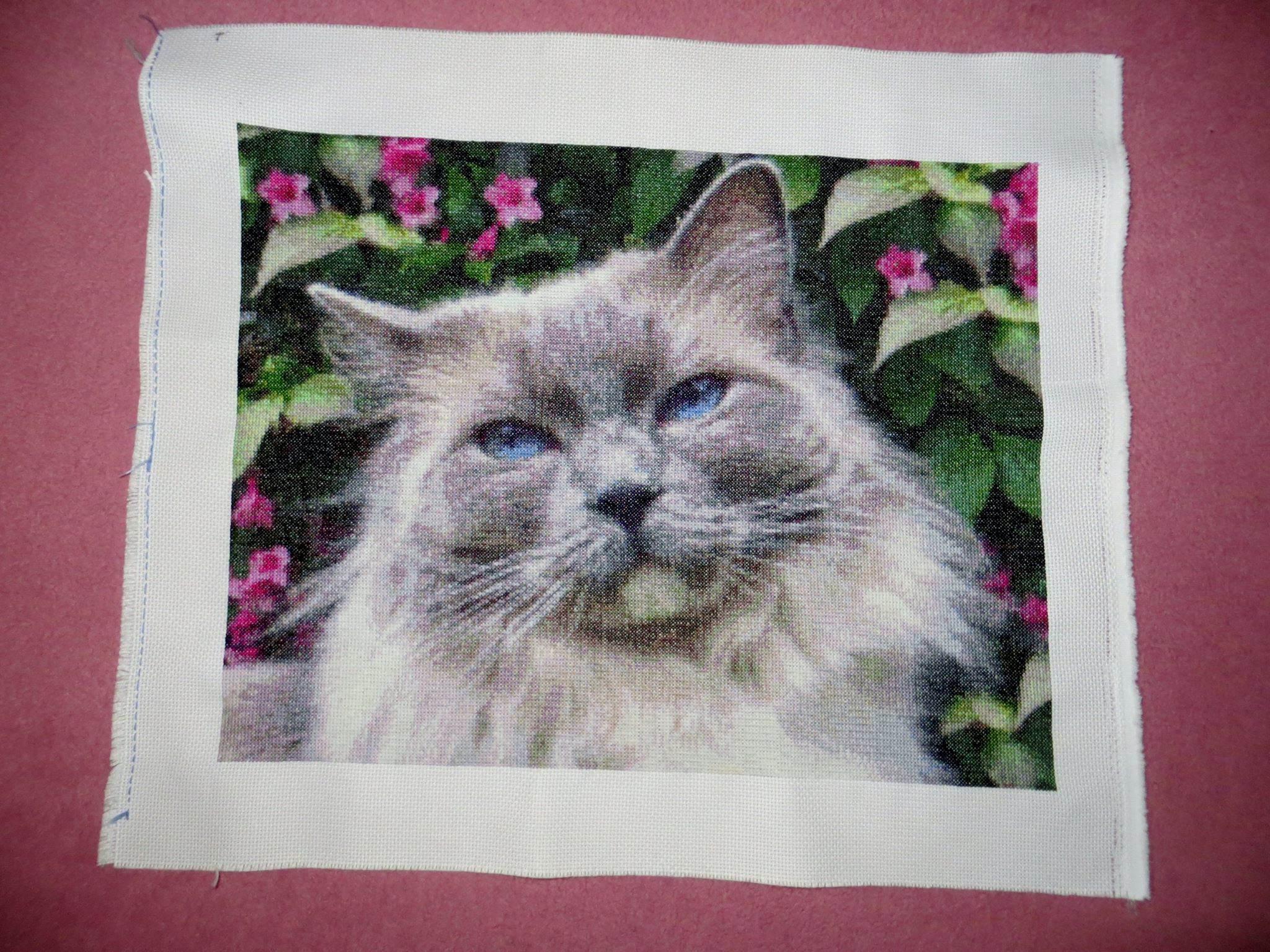 Skye Cat Custom Pattern