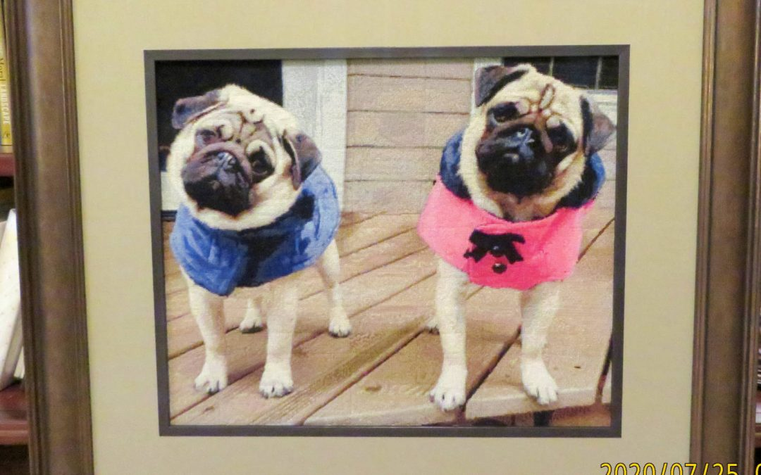 Pugs by Cindy Shoffner