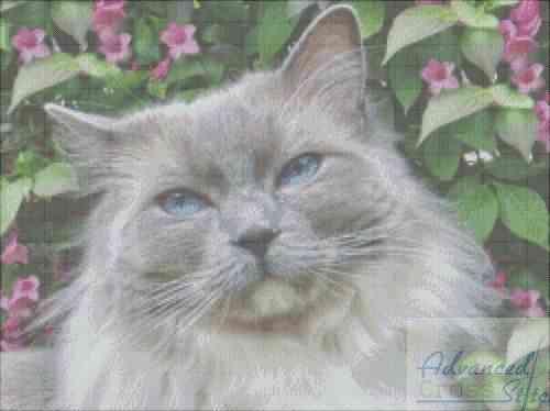 Cat Mockup