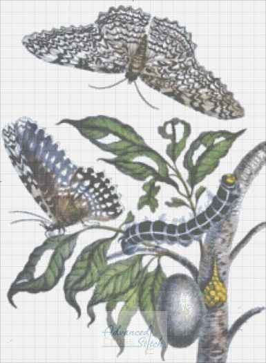 Metamorphisis – Butterfly Life Cycle Cross Stitch Pattern
