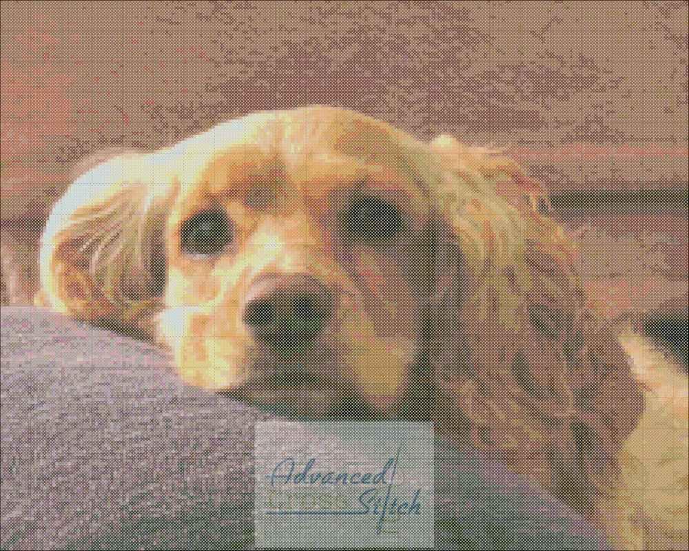 Blonde Cocker Spaniel Dog Cross Stitch Chart Advanced Cross Stitch