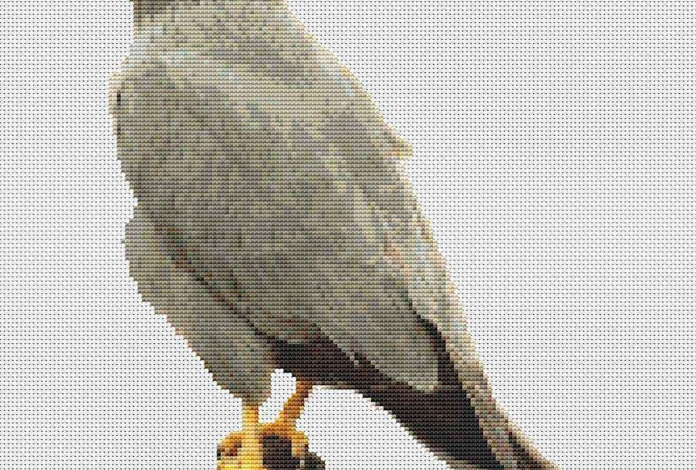 Red Footed Falcon Cross Stitch Design