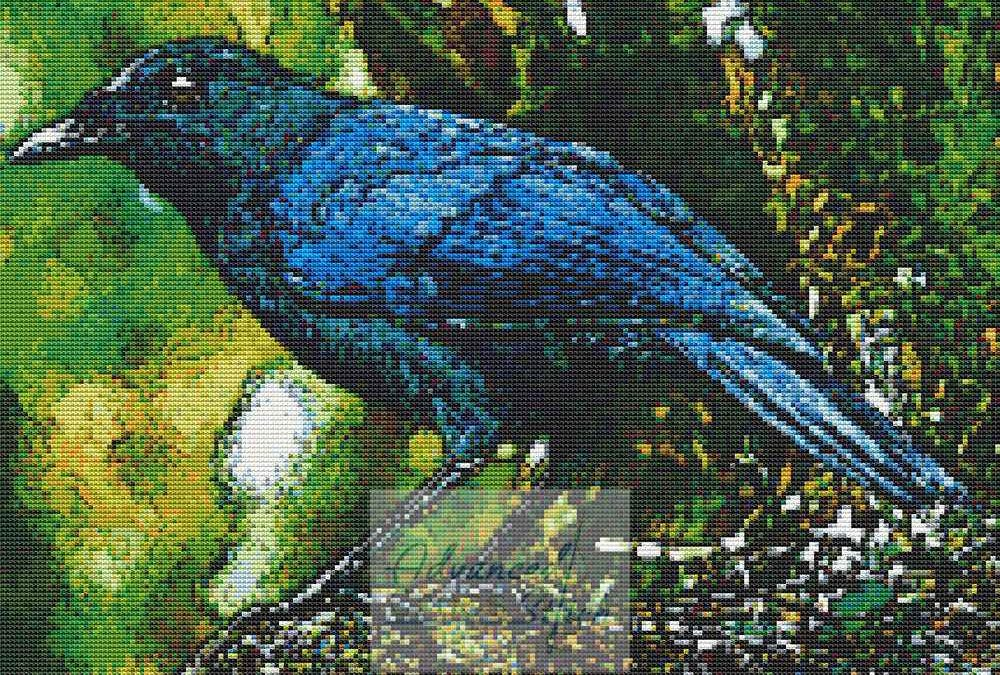 Malabar Whistling Thrush Cross Stitch Bird