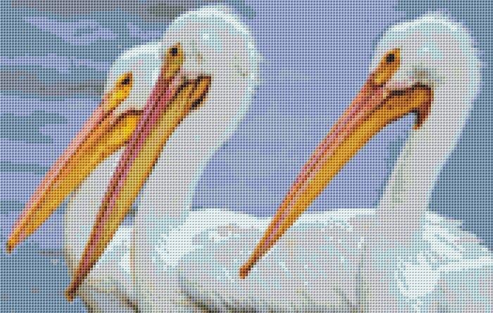 Pelican's Cross Stitch Chart