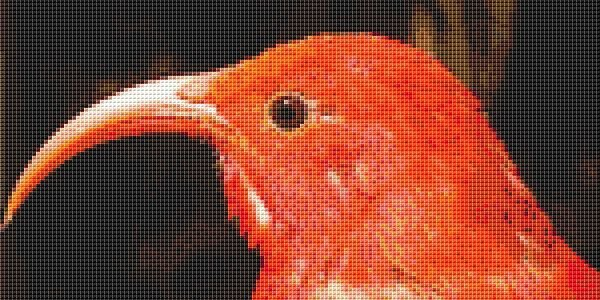 'L'iwi Bird Cross Stitch Chart – Endangered Species