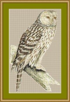 Vintage Owl Cross Stitch